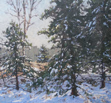 Winter_Evergreen